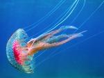 adaskos_JellyFish%20Syros